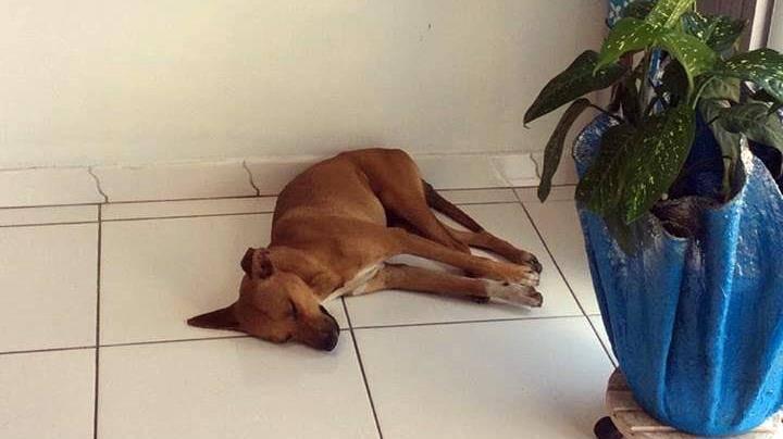 Devido ao calor em Garuva, cachorro entra em comercio para aproveitar o Ar Condicionado. Donos não se importaram…
