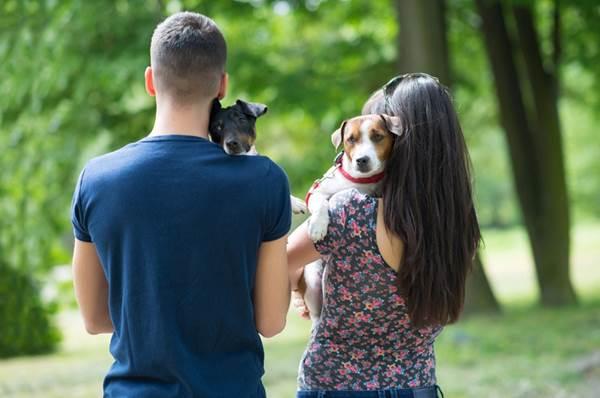 Projeto em tramitação regula guarda compartilhada de animais após separação