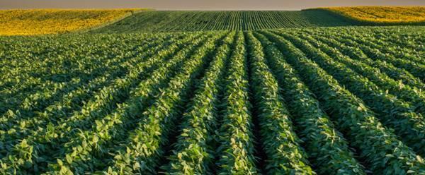 Senar/SC promoverá qualificação para produtores rurais em Garuva