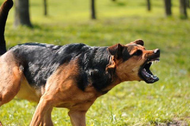 Ataques de cães em via pública preocupam moradores no Bairro Urubuquara, em Garuva