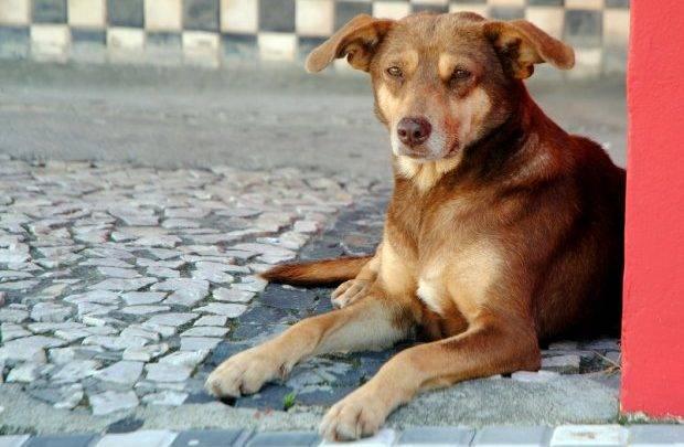Governador sanciona duas leis que garantem mais direitos aos animais em Santa Catarina