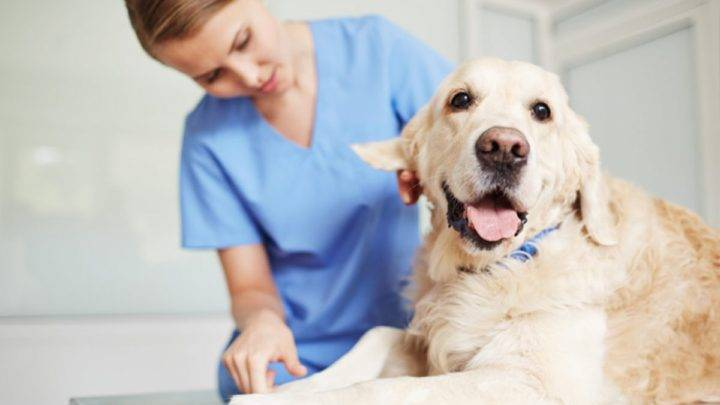 Prefeitura de Garuva credencia clínicas para castração de cães e gatos de famílias em situação de vulnerabilidade